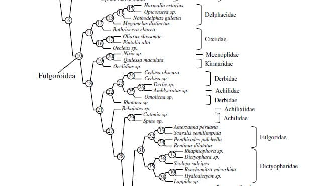 Exerpt of phylogenetic tree from Urban and Cryan (2007)