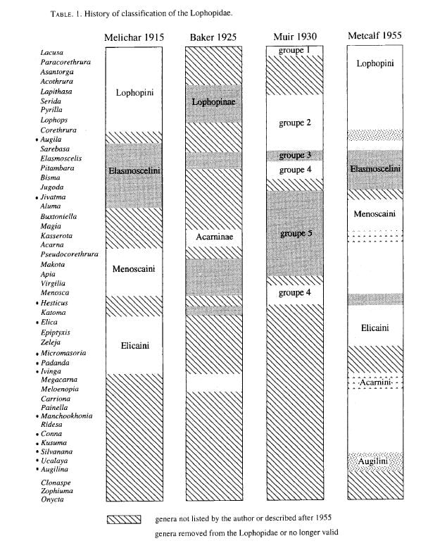 Early classifications of Lophopidae (Soulier-Perkins 1998).