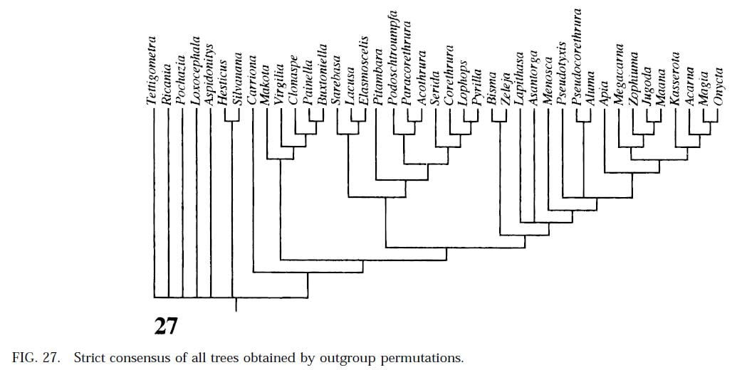Phylogeny of Lophopidae from Soulier-Perkins (2001)