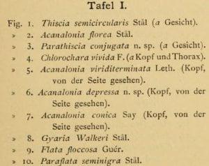 Melichar 1902 figure labels
