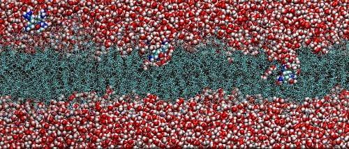 Molecular Simulations of Soft Condensed Matter