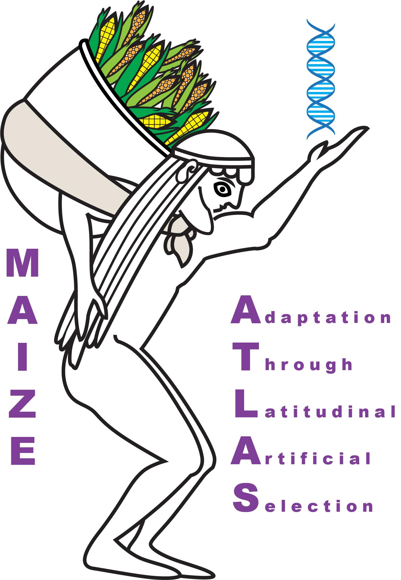 Maize ATLAS
