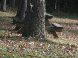 Squirrel - B. Mitchell