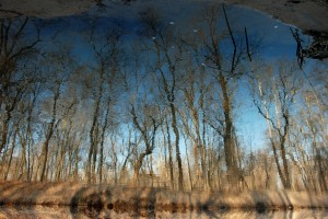 Inverted Reflection by Lauren Gregory, March 2014