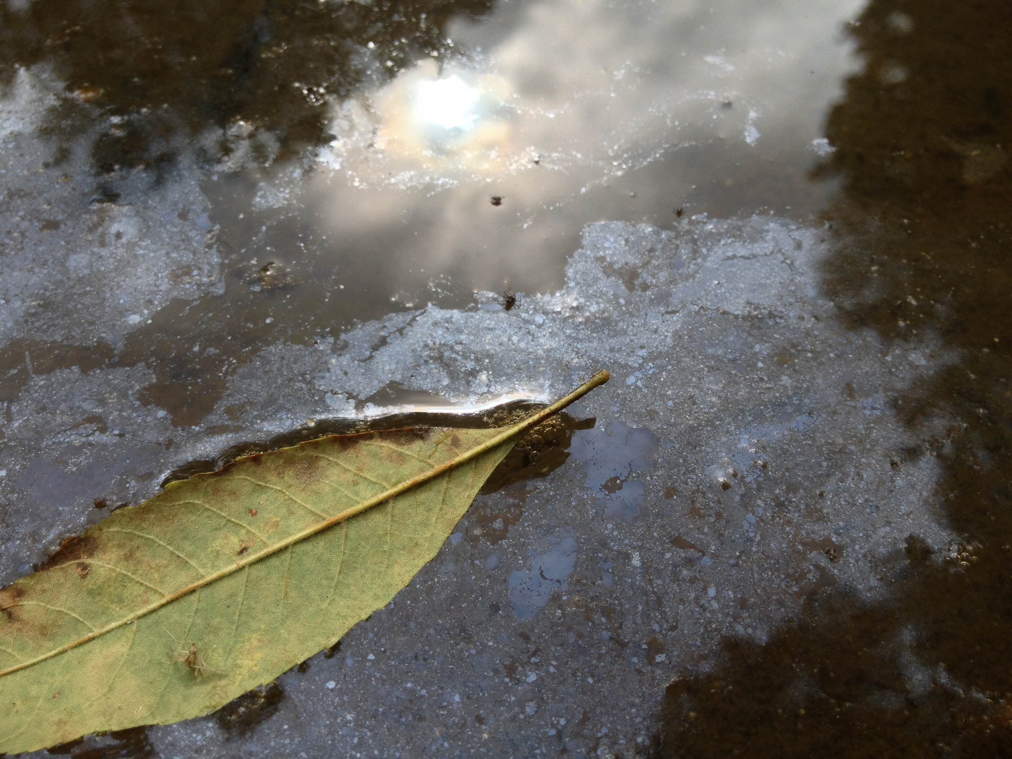 Leaf on the Water by Maddy Becker