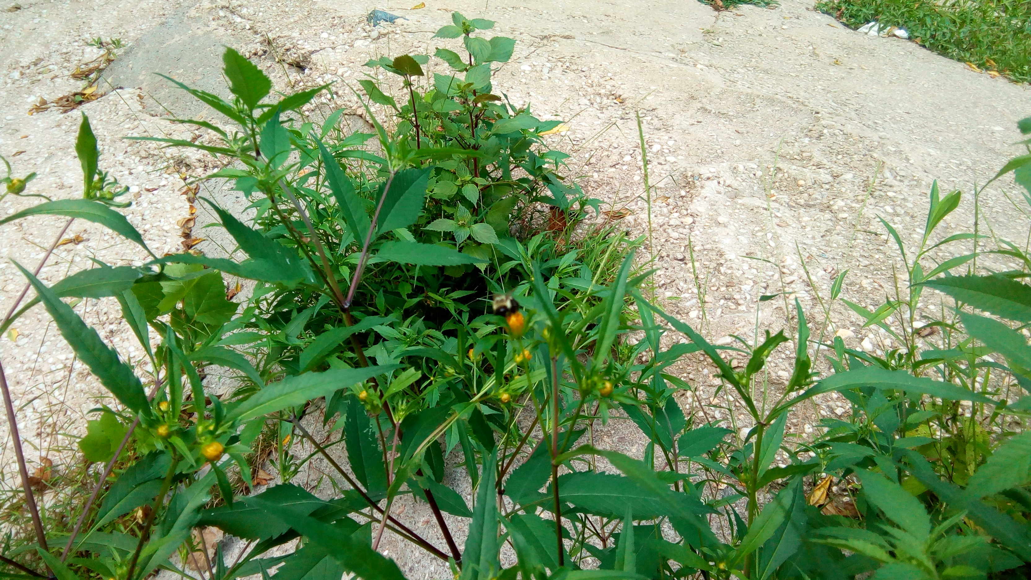 Seeing Beautiful Plants Because of Fading Bees by Ashraf Chowdhury
