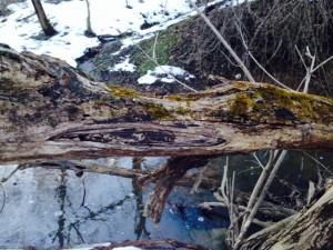 Log in the Woods, Tanya Krapf, February 2014