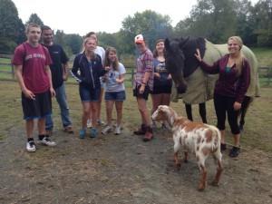Our new four-legged friends from Fairweather Organic Farm