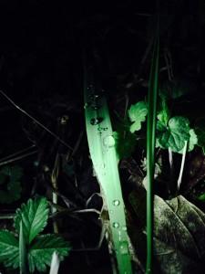 Dew on Nighttime Grass, Tanya Krapf, April 2014