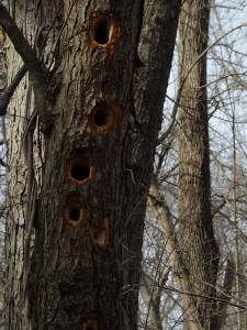 Woodpecker Holes, Kerry Snyder