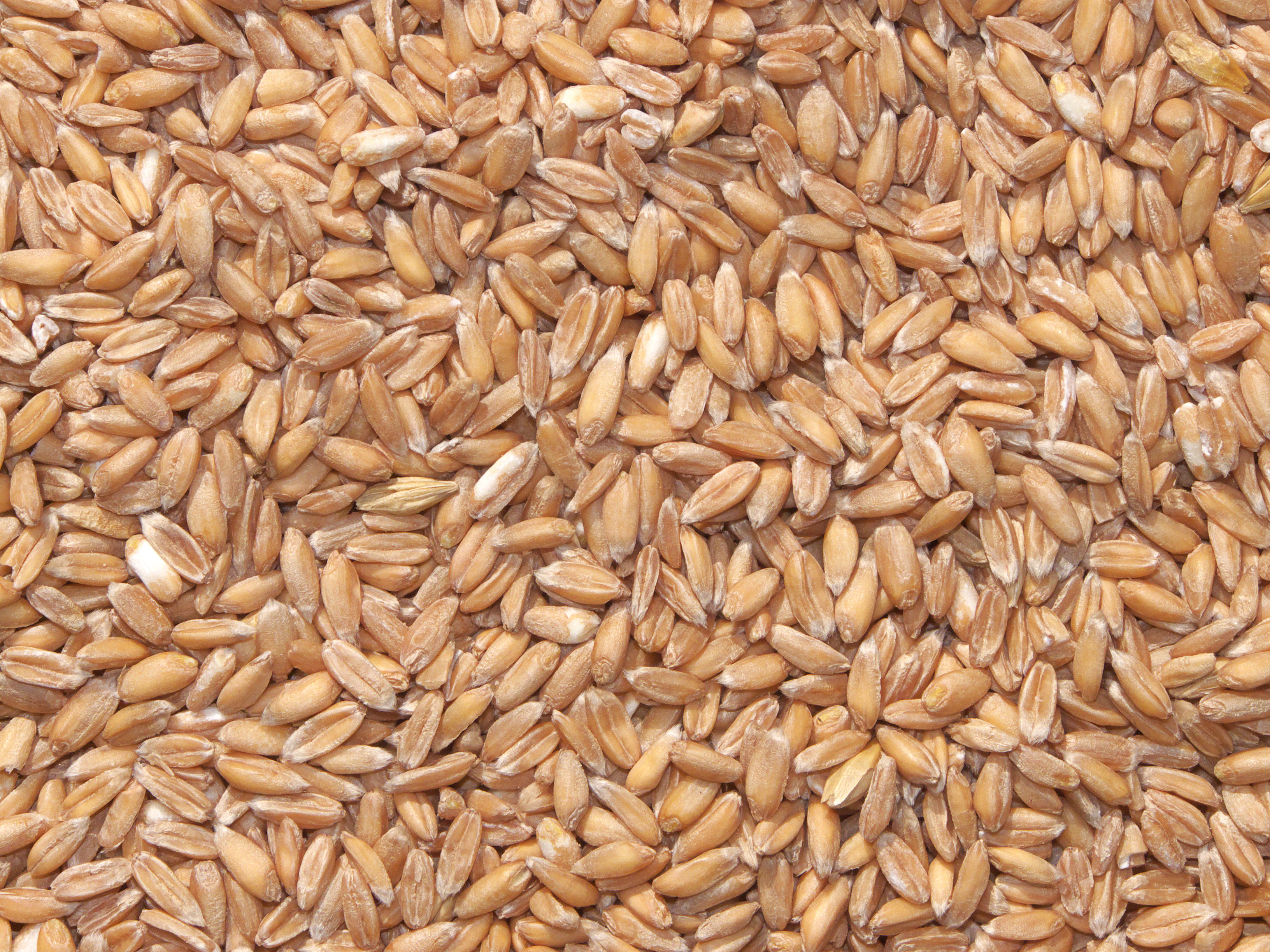 why ancient grains are a modern craze food nutrition