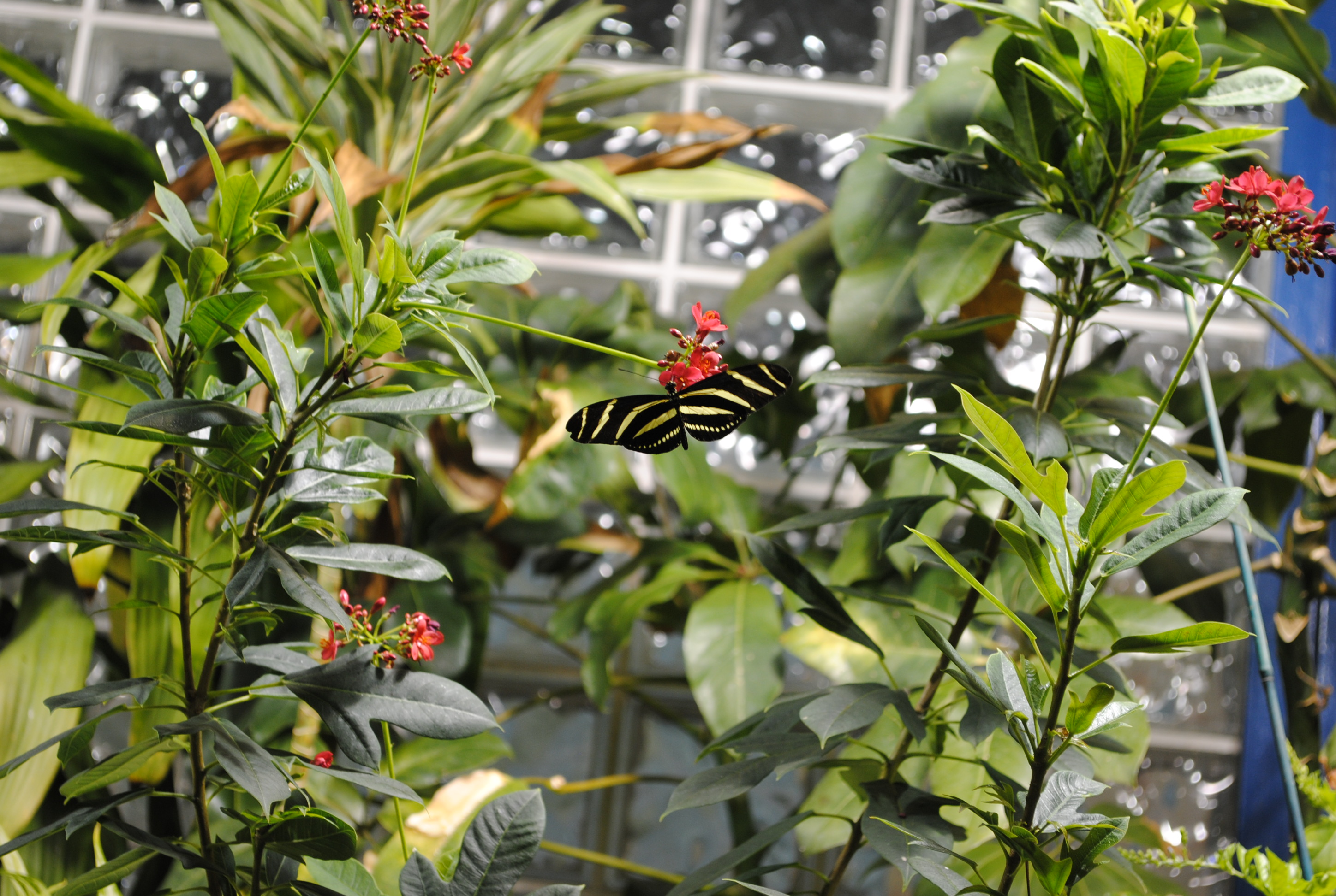 ... Beautiful Butterflies That I Took With A Nikon D3000 SLR At The Museum  Of Natural History In Philadelphia. The Museum Has A Butterfly Room That Is  Quite ...