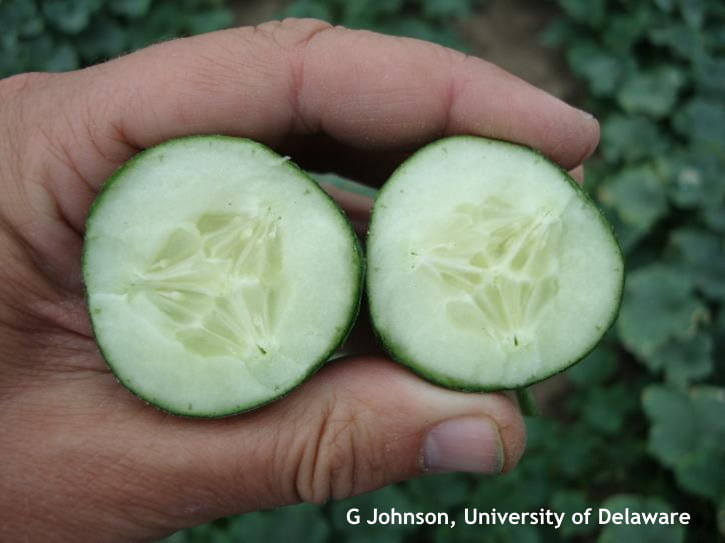 Parthenocarpic cucumbers are essentially seedless.