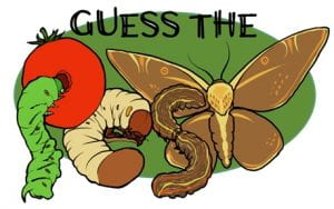 Guess the pest logo and response button