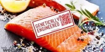 GE salmon