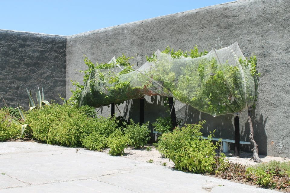 Garden started by Nelson Mandela, Robben Island, South Africa, January 2012