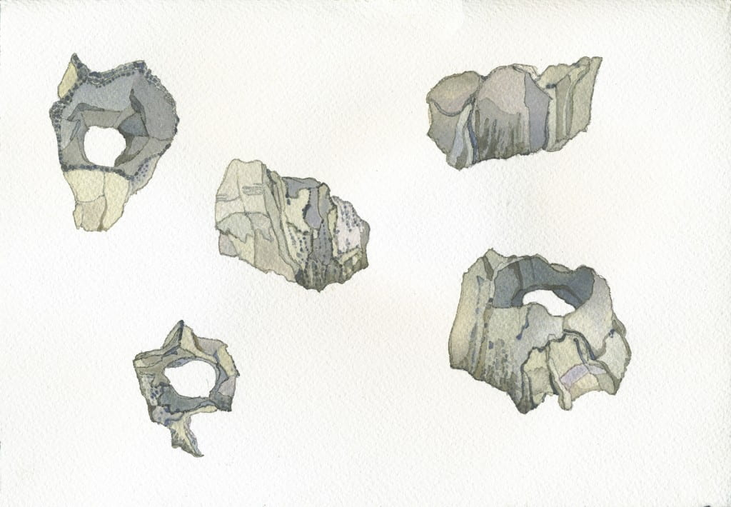 Barnacle Studies I2016, watercolor on Arches, 7 x 10 inches