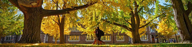 11.10.2015--The Ginkgo Walk in the fall on the Danforth Campus. James Byard/WUSTL Photos