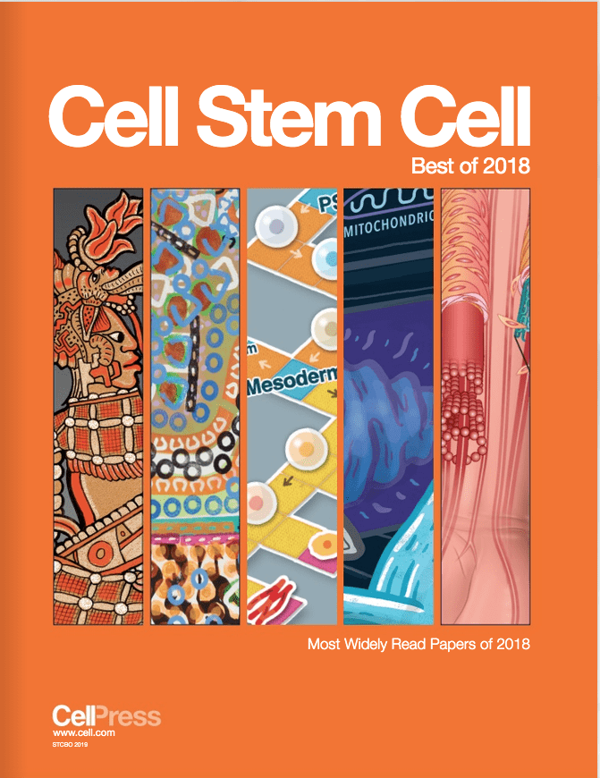 Paper from Humphreys & Morris labs featured in 'The Best of Cell Stem Cell 2018'