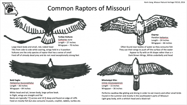 Raptors Of Missouri Missouri S Natural Heritage Washington University In St Louis