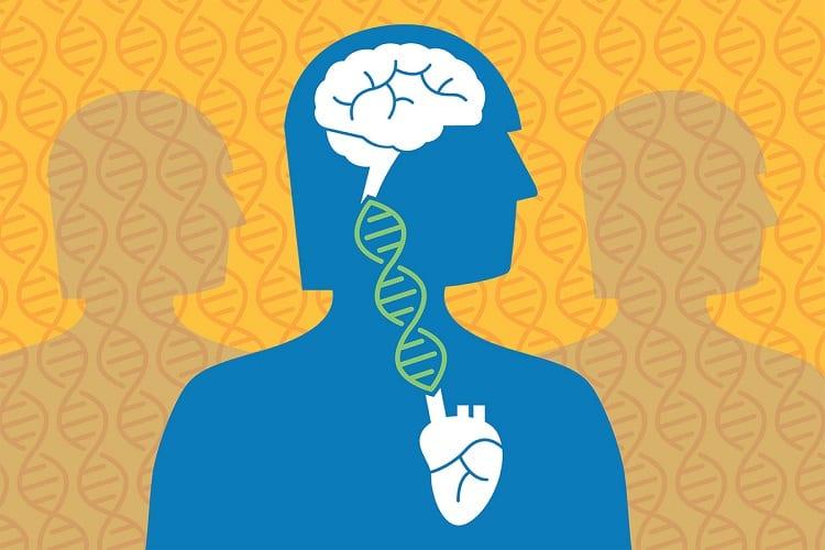 Cardiovascular disease, Alzheimer's genetically linked