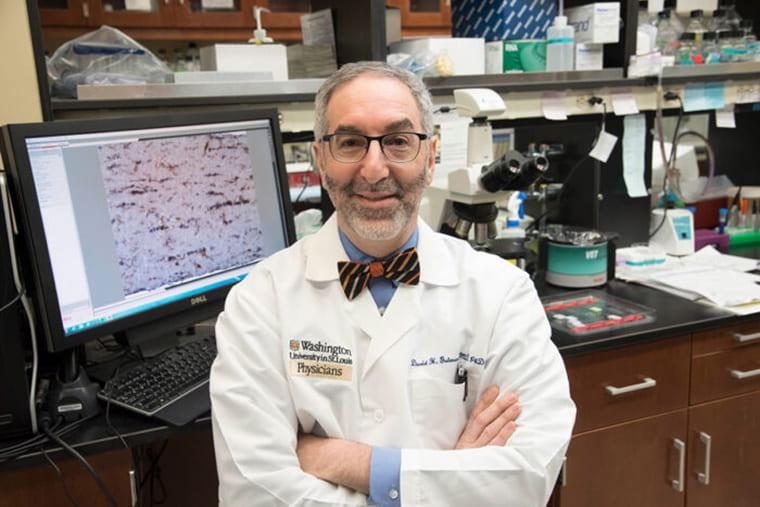 Immune cells determine how fast certain tumors grow | Office of