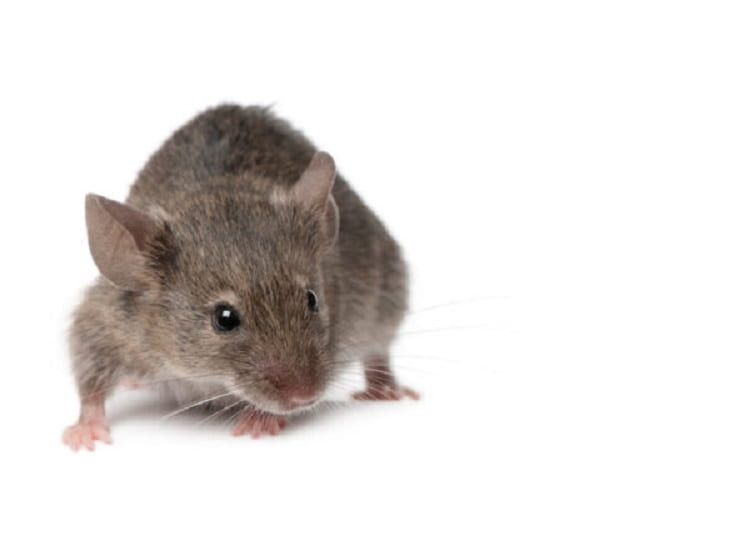 Aging delayed in older mice given blood component from young mice