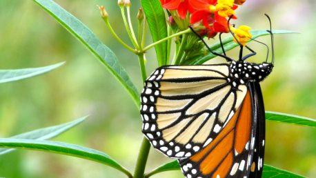 Elizabeth Danforth Butterfly Garden