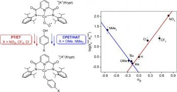 Mechanistic Dichotomy in Proton-Coupled Electron-Transfer Reactions of Phenols with a Copper Superoxide Complex