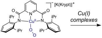 Using a Monocopper-Superoxo Complex to Prepare Multicopper-Peroxo Species Relevant to Proposed Enzyme Intermediate