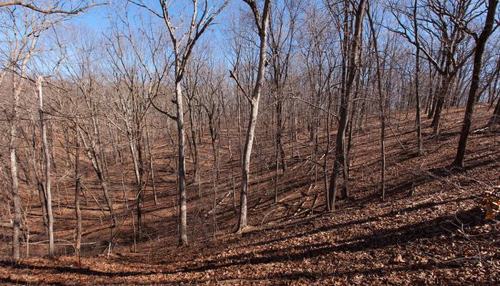 Southeast corner of the old 4-ha plot, Tyson Forest Dynamics Plot. Taken in Winter 2012