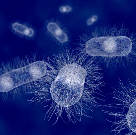 Engineered strains of E. coli were used in the cellular kill switch research. The PopQC sensor rewarded high-performing bacteria with extra protein to grow and thrive; the lazy bacteria were eliminated.