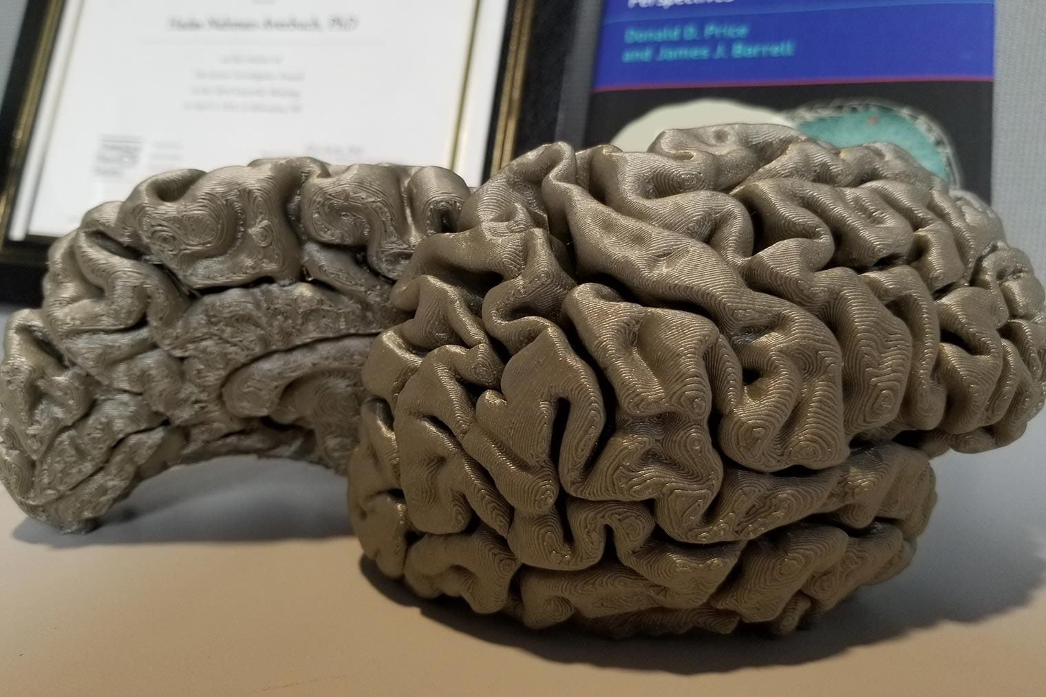 picture of a brain model