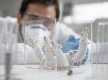 Scientists Reverse Alzheimer's-Like Symptoms in Mice