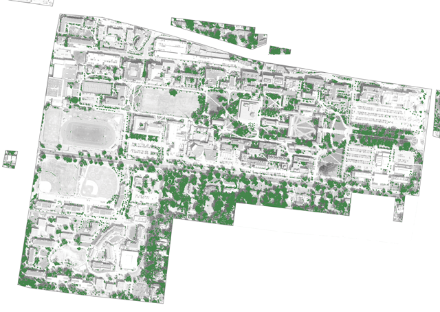 16% of the campus is covered with tree canopy.