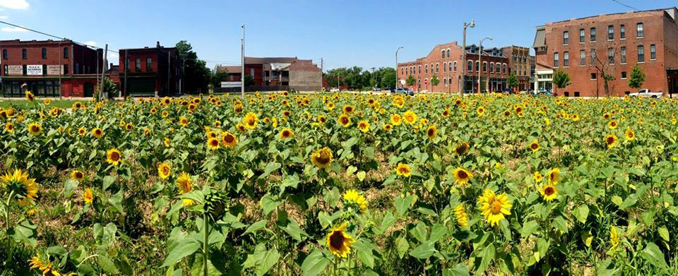 Sunflower Project