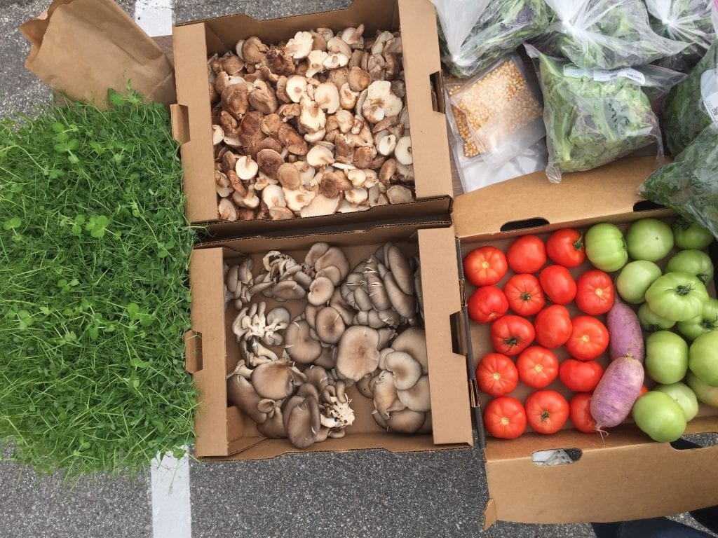 Spring has Arrived at WashU's CSA and Farm Stand