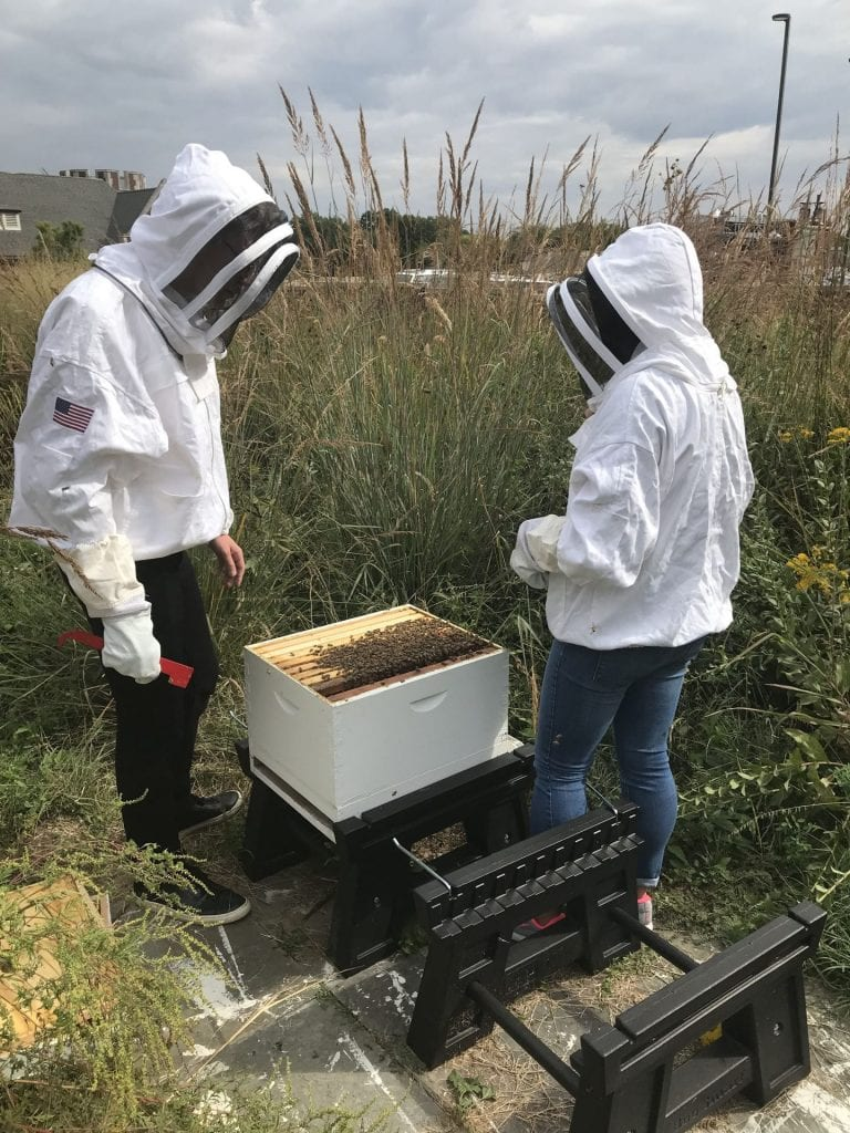 WU Beekeepers – A Student Group Revitalized