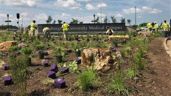 Medical Campus Expands Native and Adaptive Landscapes