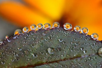 close up of leaf with flower reflection in water droplets