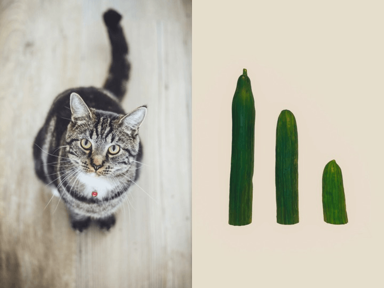 picture of a cat and some cucumbers