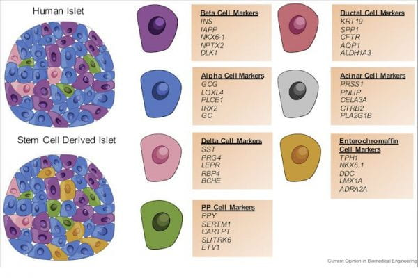 Augsornworawat and Millman publish review article on single-cell technologies