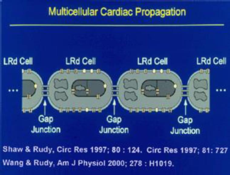 Cardiac Tissue Modeling