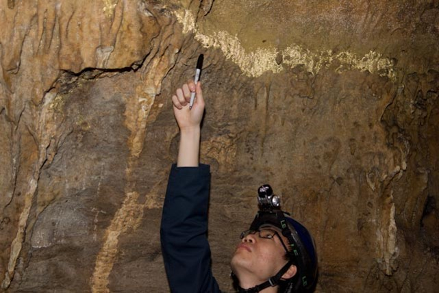 Investigating Tyson caves for antifungal bacteria to combat white-nose syndrome
