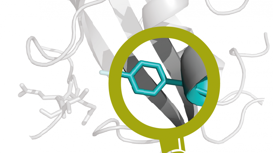 ProteomeScout is our database of proteins and post-translational modifications.