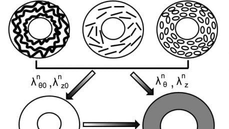 Kim et al., Biomech Model Mechanobiol, 2020