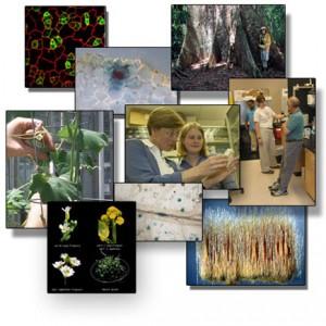 Plant-Cell-Mol-Biol