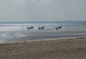 Three Frenchmen race horses down Utah Beach.