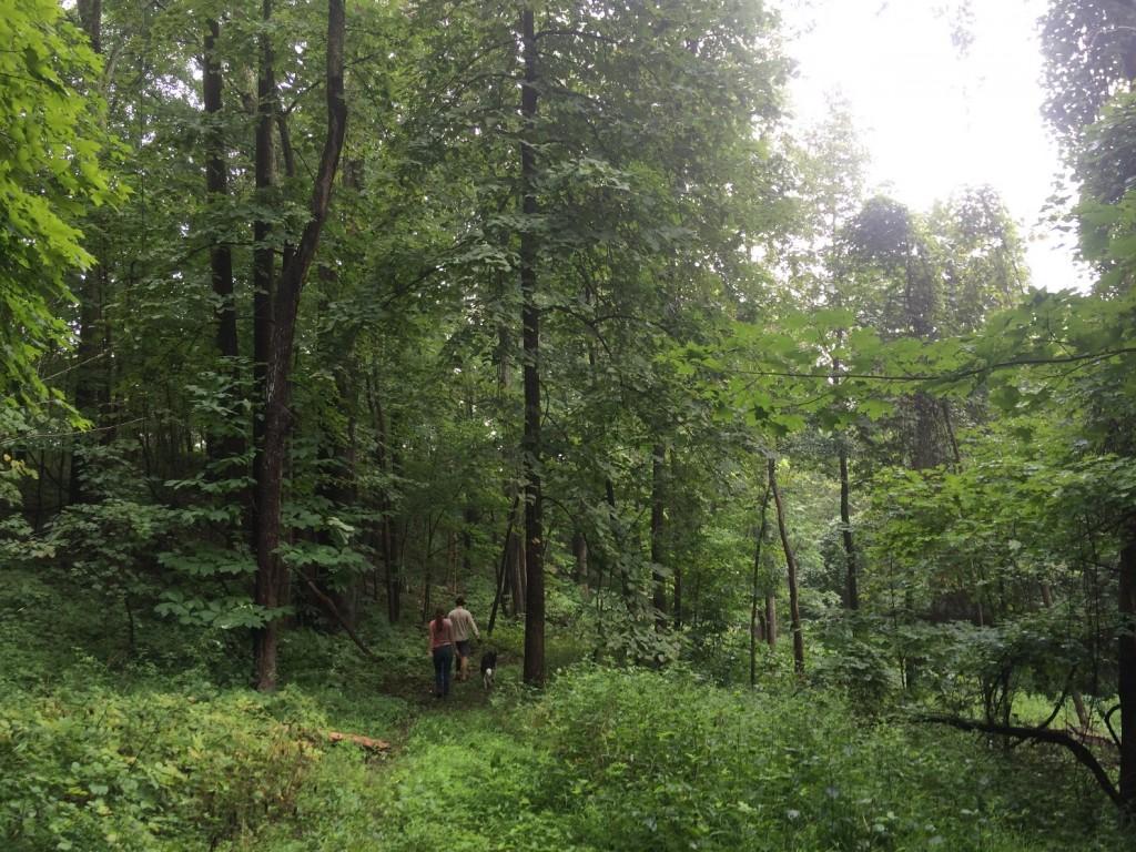 woods-walk