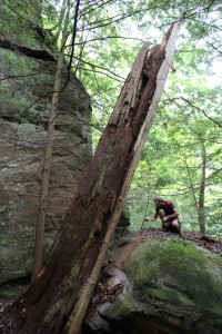 Large, standing dead, American chestnut at Canter's Cave 4-H camp